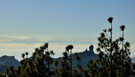 pinaceae: Panoramic from summit of Gran canaria with pines in foreground, Roque Nublo and Tenerife island background at sunset, Canary islands