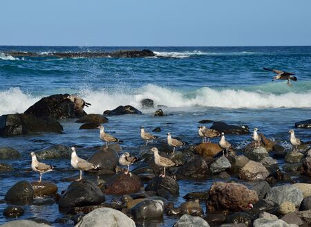 Seagulls in the seashore on the rocks and others flying Stock Photo
