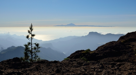 Solitary pine, summit of Gran canaria, Canary islands