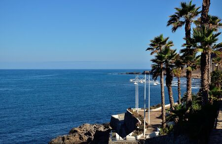 Palms next to the sea, Las Palmas of Gran canaria, Canary islands