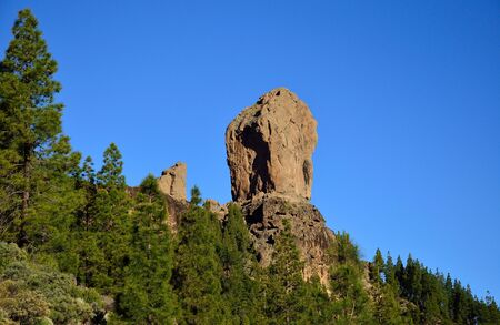 mountainous: Pine forest, Roque Nublo and intense blue sky, Gran canaria, Canary islands Stock Photo
