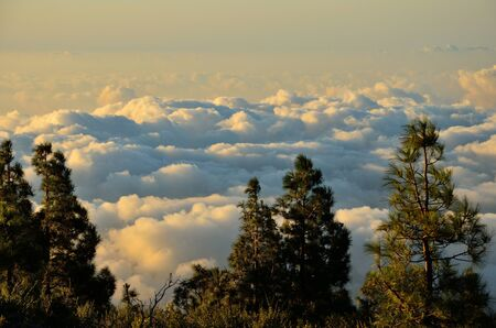 climatic: Pines in foreground and sea of clouds in background Stock Photo