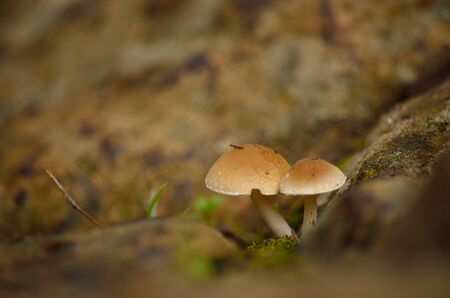 Tiny mushrooms on the wet soil, in foreground and blurred background