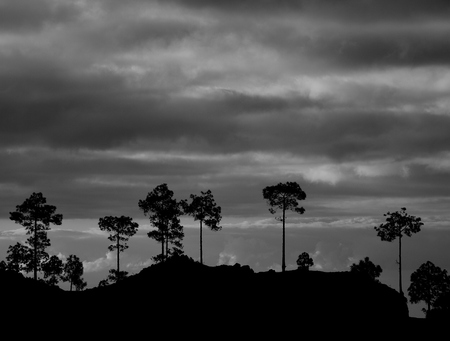 Silhouettes of pines and cloudy sky at dawn with monochrome effect, Pilancones, Gran Canaria