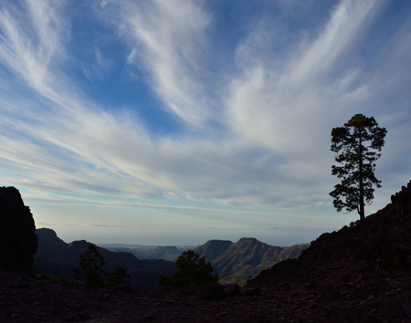 Mountain landscape, cloudy sky and lonely pine during the dawn, Pilancones, Canary islands Banco de Imagens