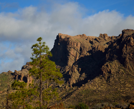 Pine trees and cliffs, La Plata, mountains of Gran Canaria, Canary Islands