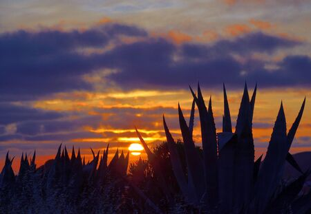 Amazing dawn with covered sky, sun among clouds and agave plants in foreground