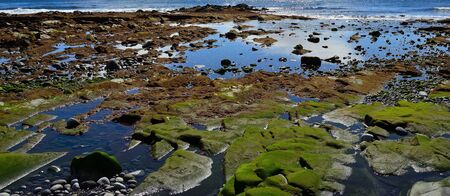 Colorful coast at low tide with algae on the rocks, water puddles and stones
