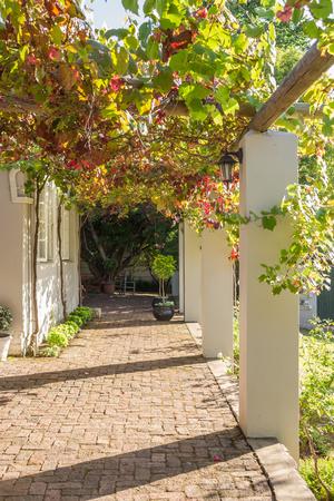 verandah: Photo of a vine covered verandah in the morning sunlight Stock Photo