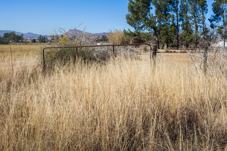enclosure: Long grass overgrown farm gate to horse enclosure in South Africa