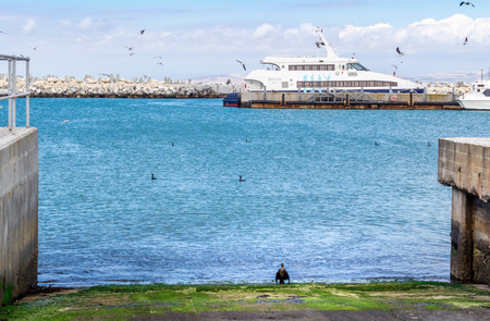 robben island: Catamaran docked at harbour on Robben Island with cormorants and seagulls Editorial