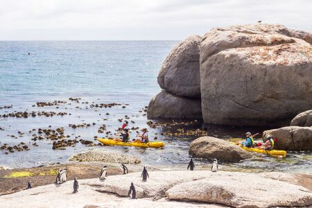 A group of tourists on kayaks viewing penguins near Boulders Beach, Simons Town, South Africa