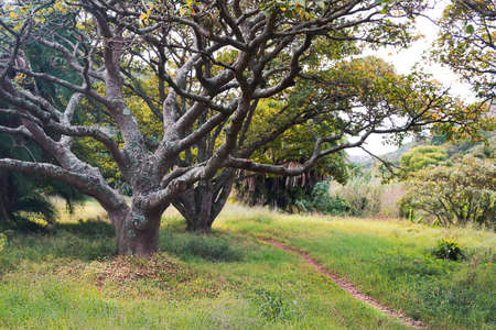Trees in a park with path - old majestic tree with gnarly branches in green field - beautiful tree background