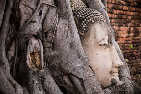 Stone buddha head in tree roots. Stock Photo