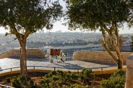 Mosque of Caliph Omar  dome of the rock   in Jerusalem   View from the mount of Olives  Archivio Fotografico