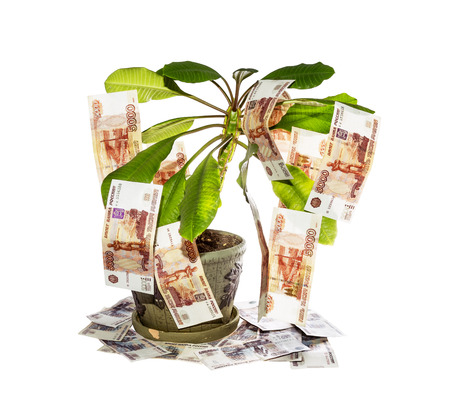 Decorative tree with cash notes on branches on a white background photo
