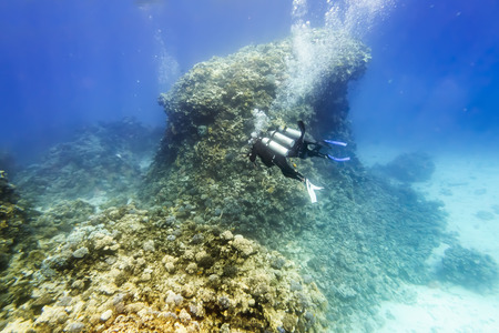 Divers in gear swim under water amid coral reef in the Red Sea, Egypt Stock Photo - 28178644