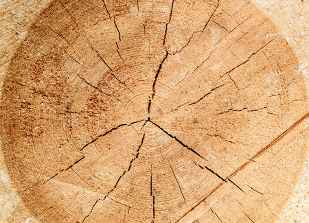 cut logs: The cut wood, the texture of the wood surface of the logs