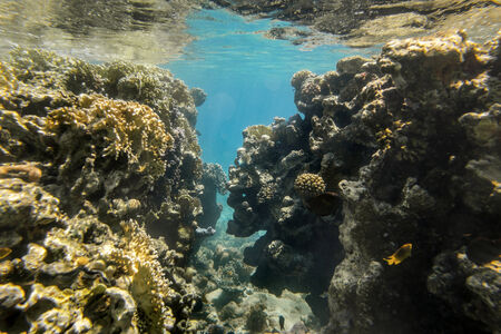 mohammed: Coral Reef in the nature reserve of Ras Mohammed on the Red Sea in Egypt