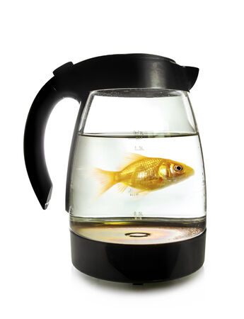 goldfish jump: Goldfish swimming around in an electric kettle, isolated on white background