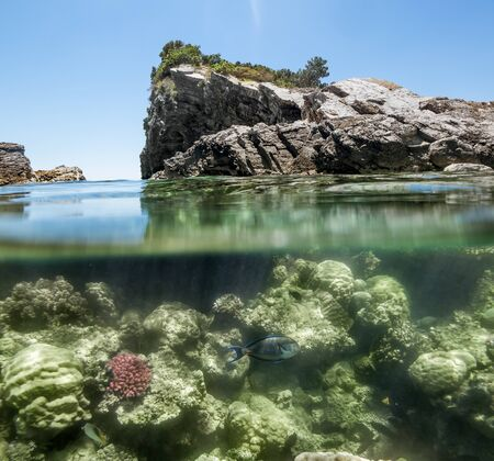 hardcoral: The rock above the water and colorful fish swim in the coral reef in the sea
