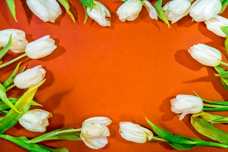 beautiful tulips are laid out in a frame on an orange background top view. Background of Mother's Day, International Women's Day. Holiday, give a gift. Archivio Fotografico