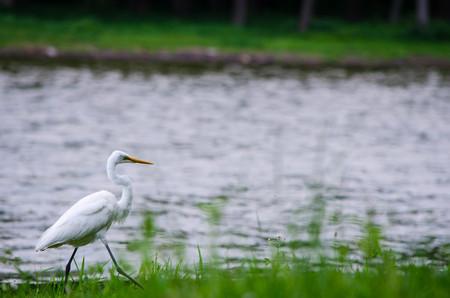 heron: Heron