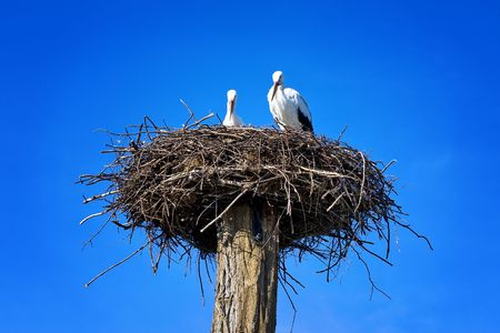 storks nest Stock Photo