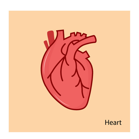Human internal organs heart on a orange background