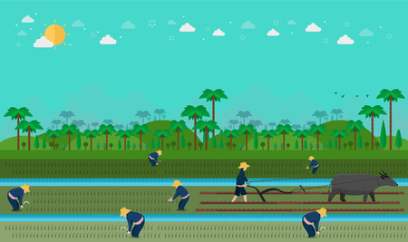 Asian farmers rice planting. Tropical Asia. Vector illustration Illustration