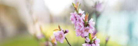 horizontal format: Nature photo background, horizontal format