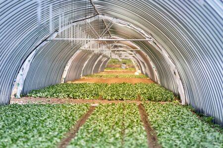 semiproductos de invernadero, la producción de hortalizas