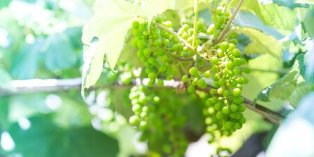wine making: Agriculture and wine making concepts