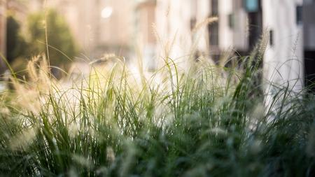 horizontal format: Grass photo background, horizontal format