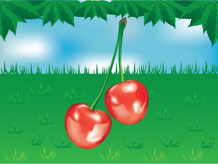 Red sweet cherryon the blue sky with green leaves Illustration