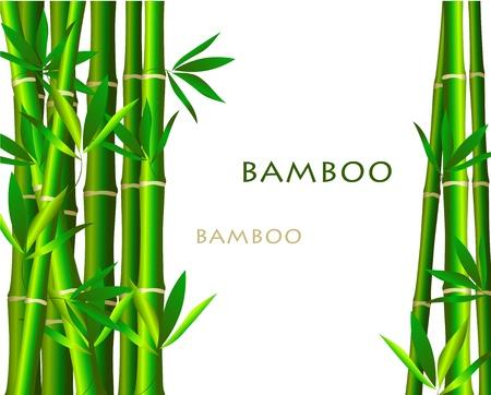 Bamboo isolé sur fond blanc