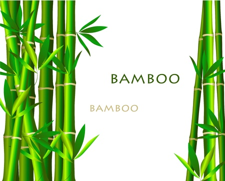 fengshui: Bamboo isolated  on white background Illustration