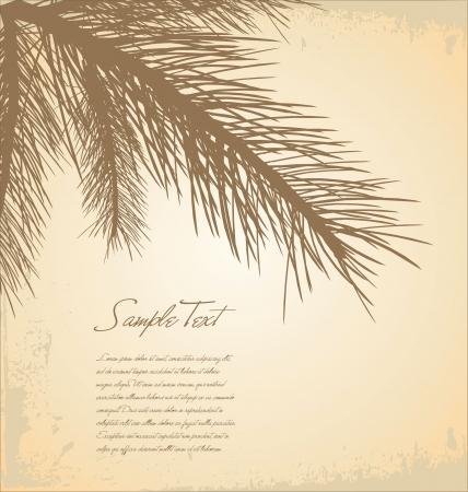 pine needles: Pine branch background