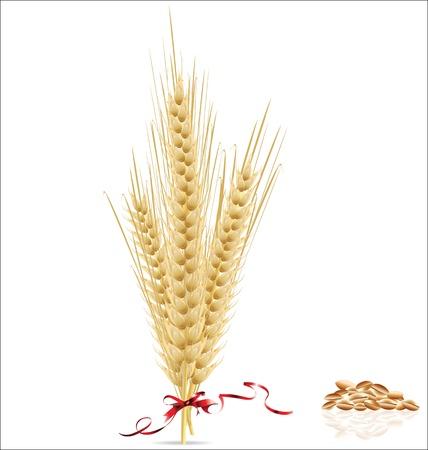 ядра: Колосья пшеницы с красной лентой
