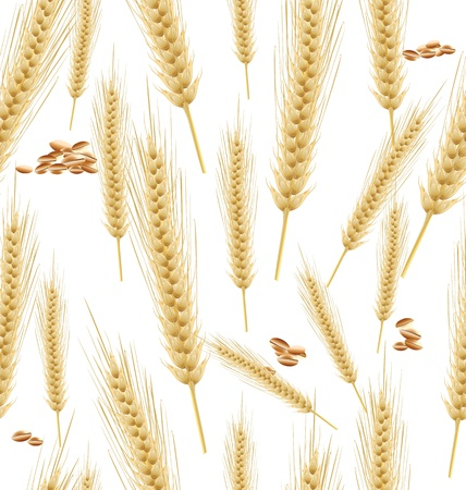 Wheat seamless background Vector