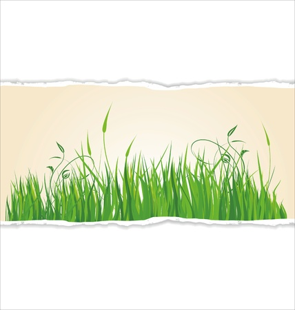 antiqued: Green grass on torn paper