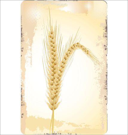 bran: Wheat