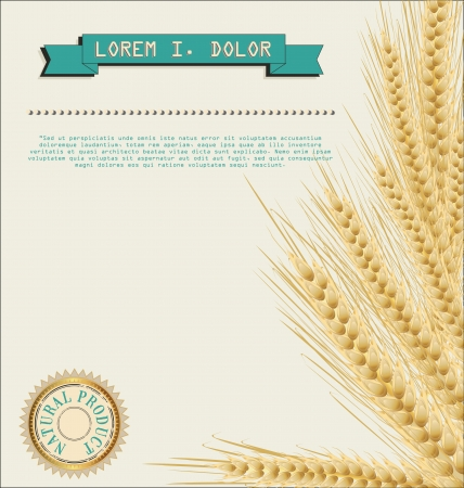 Wheat background natural product Vector