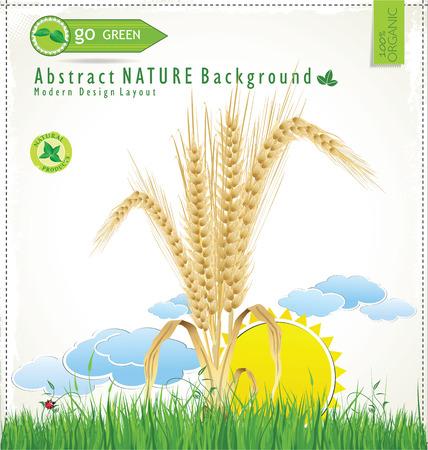 wheat grass: Modern nature design template Illustration