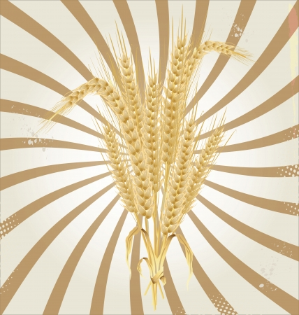 Wheat retro background Vector