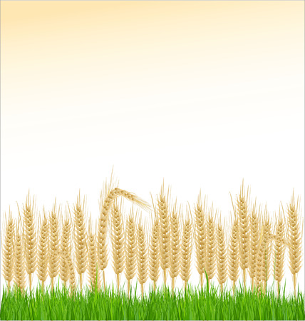 cultivated land: Wheat and grass