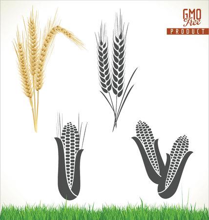 espiga de trigo: maíz