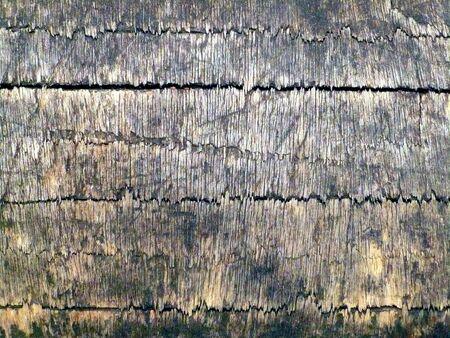 weather beaten: closeup del legno wheathered con tessitura fine