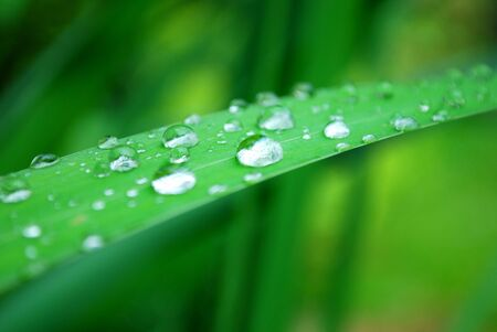 close-up of dew drops on a grass leaf Stock Photo - 5137658