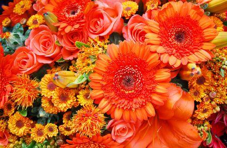 blumen: orange flowers filling th entire picture